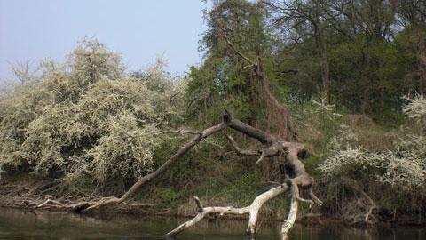 Foto 8 – Emmaus-Fahrt – mit dem Kanu auf der Lippe