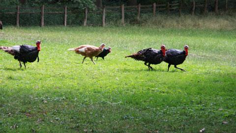 Foto 2 – Zum Biotopwildpark Anholter Schweiz