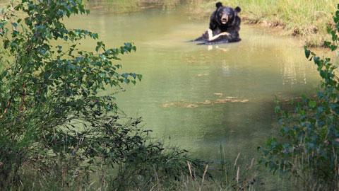 Foto 4 – Zum Biotopwildpark Anholter Schweiz