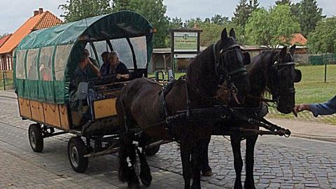 Foto 5 – Sommertour mit dem Bus zum Darß / Plau am See