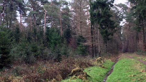 """Foto 3 – Winterspaziergang """"rund um Schloss Lembeck"""""""