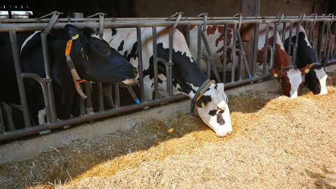 Foto 3 – Besuch des Hofes Wübbelt in der Bauernschaft Orthöve