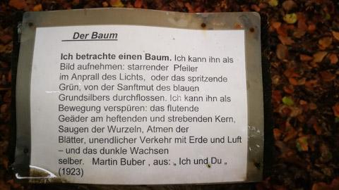 Foto 4 – Kombinierte Rad- und Fußwanderung durch den Barloer Busch (Stadtswald)