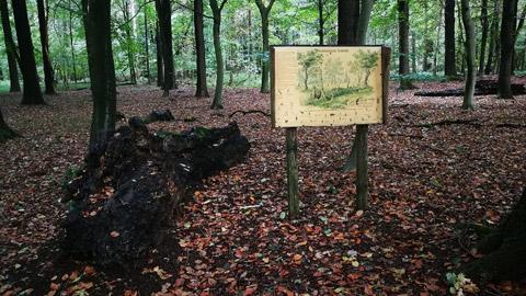 Foto 6 – Kombinierte Rad- und Fußwanderung durch den Barloer Busch (Stadtswald)