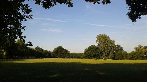 Typische Landschaft: Weiden